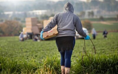 CIERTO AWARDED GRANT BY WALMART FOUNDATION TO EXPAND SCOPE OF ETHICAL H2A MIGRANT WORKER RECRUITMENT